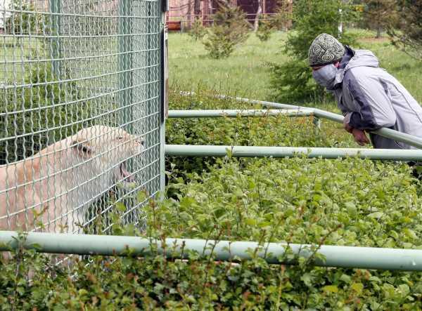 Mangoes off the menu for lonely primates, as Kiev zoo struggles in lockdown