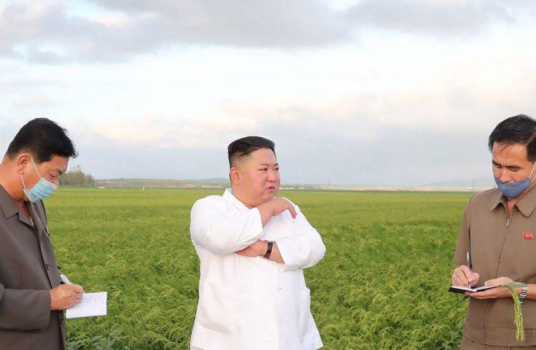 Kim Jong-un spotted inspecting cornfields amid bombshell 'death' rumours