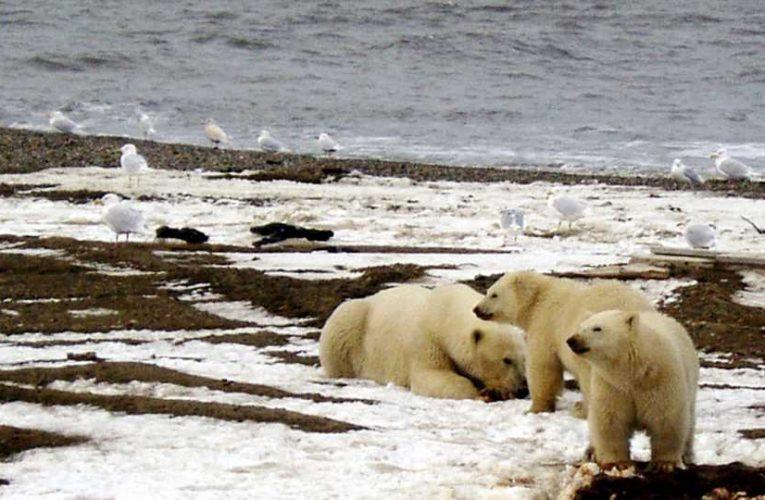 Environmental, tribal groups sue to block Alaska refuge drilling