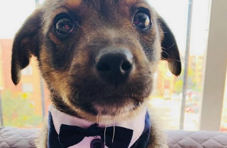 Puppy breaks hearts as he gets dressed up to meet new owners who never appeared