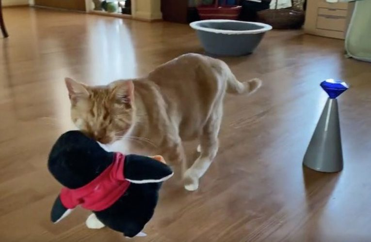 Blind cat carries stuffed penguin toy everywhere to 'avoid bumping her head'