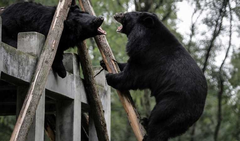 Zookeeper mauled to death by bears in Chinese animal park