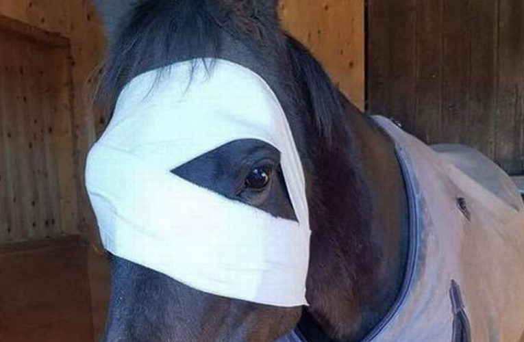 Horse loses eye after being hit by firework and may have to be put down