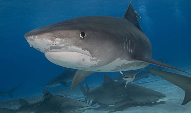 Shark horror: Hurricane Dorian survivor suffers BRUTAL injury after horror Bahamas attack