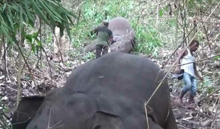 India: Lightning strike suspected of killing 18 elephants