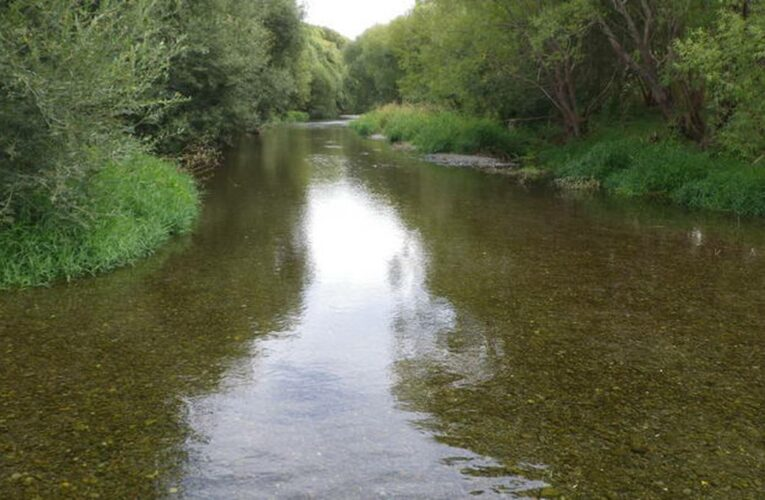 Nitrates in Selwyn River up 50% in 22 months, Federation of Freshwater Anglers says