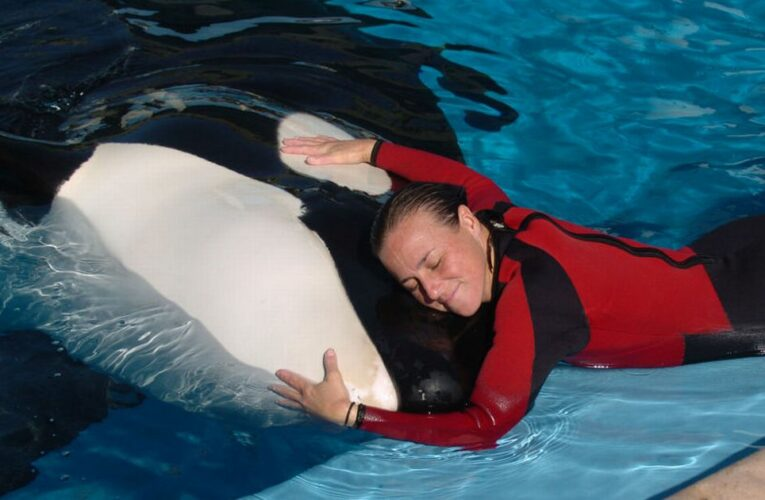 SeaWorld trainer's harrowing last moments as whale did 'deep dive' with body