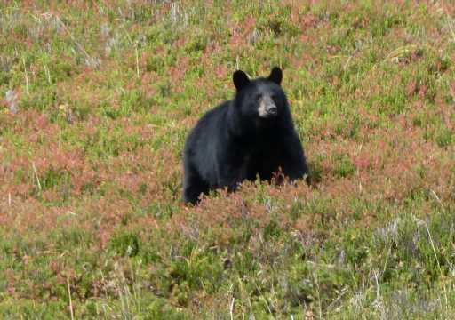 Woman killed in bear attack in SW Colorado while walking dogs is identified