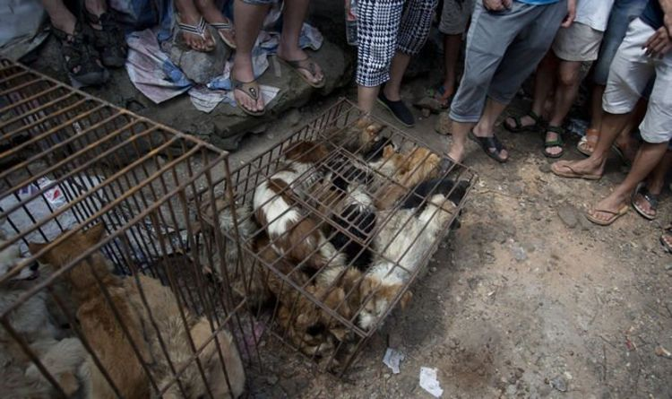 Boris Johnson: We must stand up to China in vile trade of cat and dog meat
