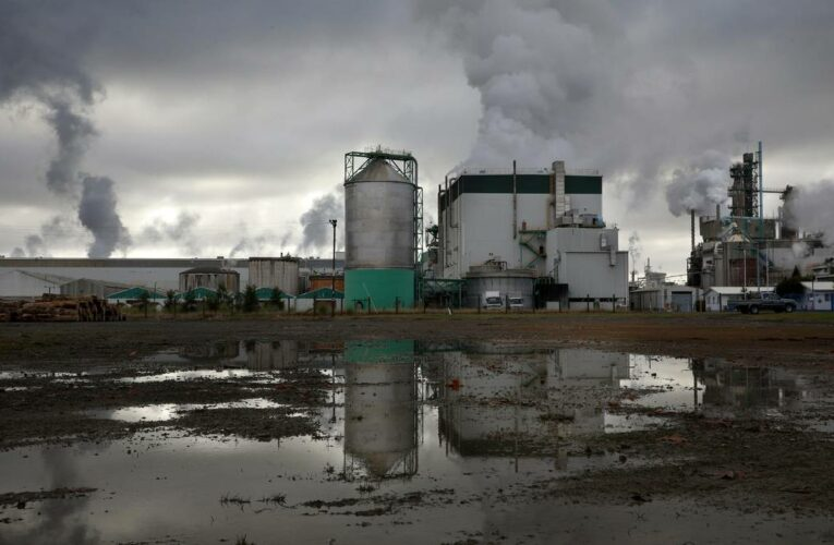 Tasman Mill closure 'not as devastating' as first thought but fears for younger workers