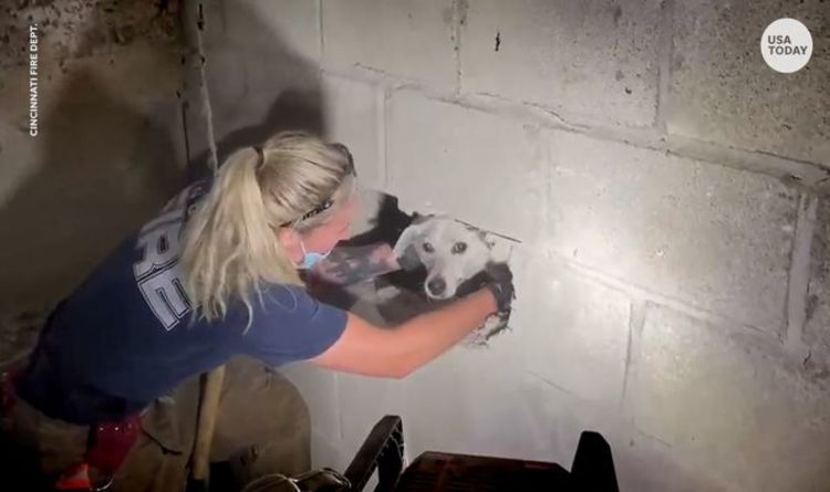 Dog trapped for five days between concrete walls rescued by firefighters