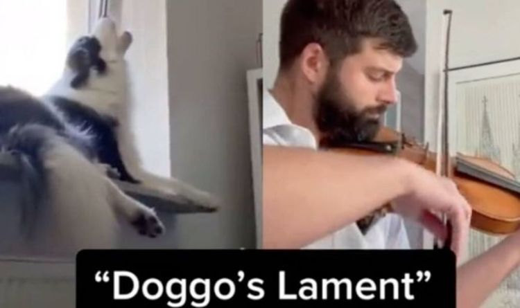 Pitch perfect: Dog howling along to violin becomes viral TikTok hit